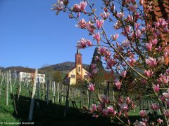 Sasbachwalden Kirche